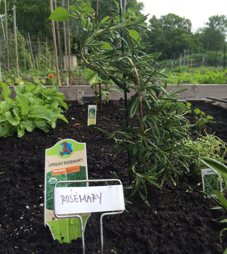 VEGGIES: Garden Update