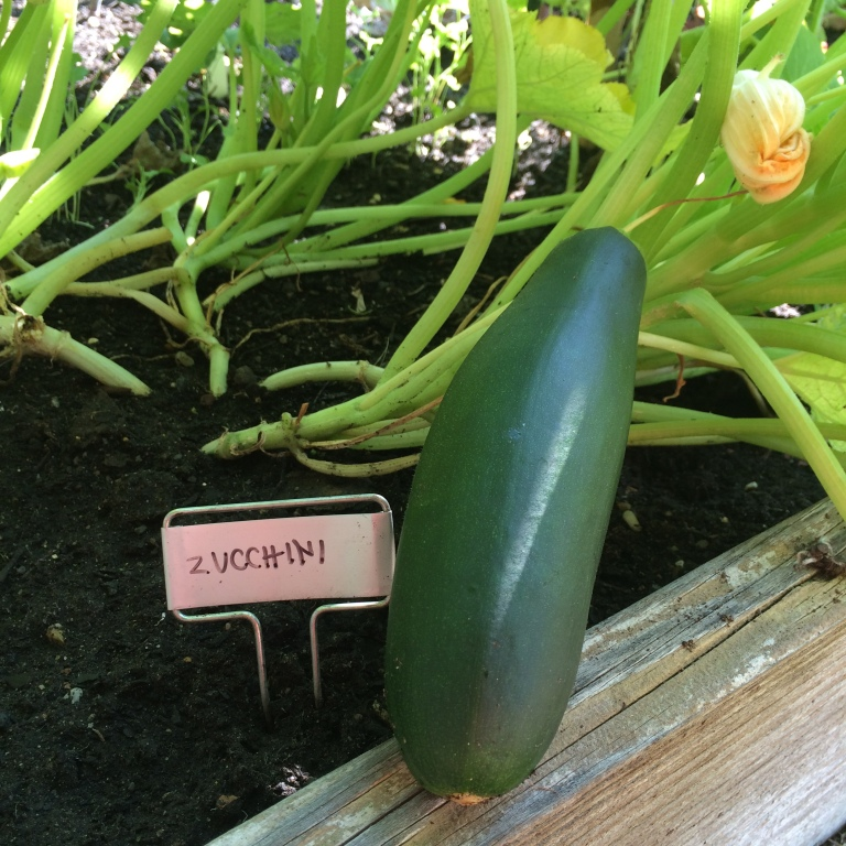 VEGGIES: COMMUNITY GARDEN UPDATE, PART IV