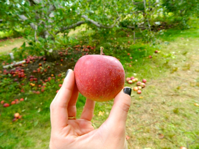 FALL: Homemade Pear Applesauce with Vanilla Bean Joe Joe's