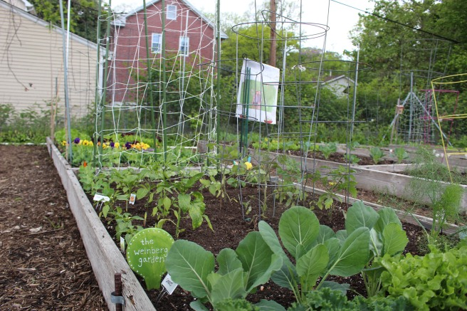 VEGGIES: Community Garden Meet & Greet