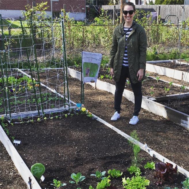 VEGGIES: Year II Begins at the Community Garden